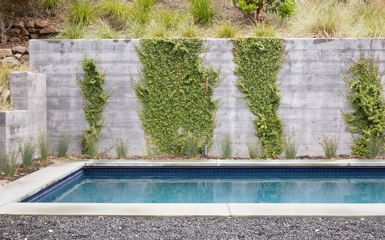 studio vara residential Kentfield pool plants