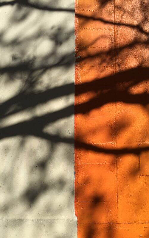 studio vara inspiration serendipitous composition half tree shadow